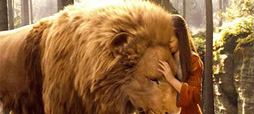 Watch and share Lion GIFs on Gfycat