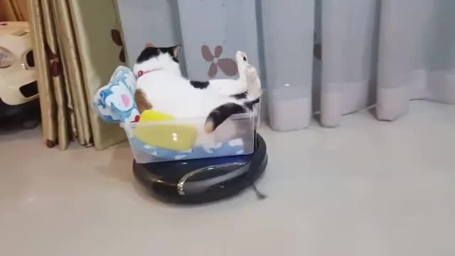 Watch and share Funny GIFs and Cats GIFs by Two_Inches_Of_Fun on Gfycat