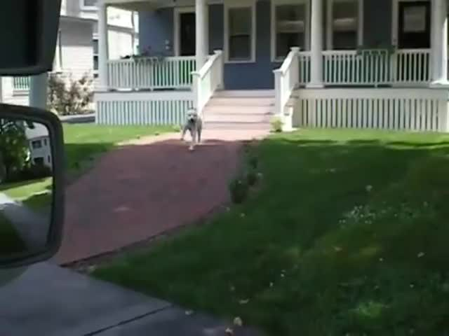 Watch and share Dog Helps The Postman GIFs on Gfycat