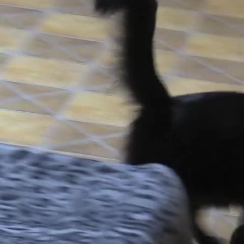 cat, cats, funny, surprise, Haha, surprise! GIFs