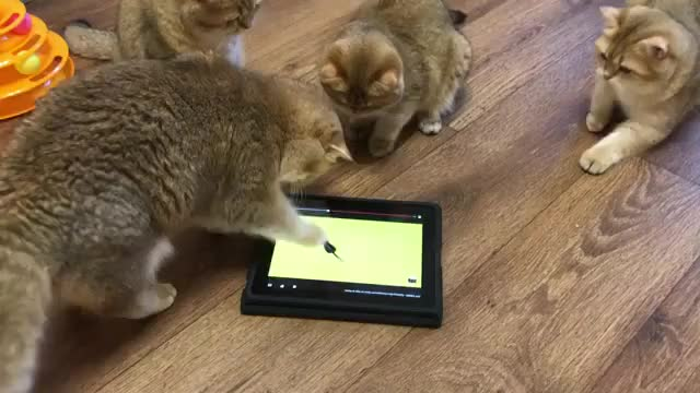 Watch CatTaps GIF by PM_ME_YOUR_TITS_GIRL (@pmmeyourtitsgirl) on Gfycat. Discover more CatTaps, cat, cute, kittens GIFs on Gfycat