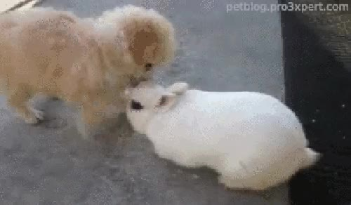 Watch Rabbits GIF on Gfycat. Discover more related GIFs on Gfycat