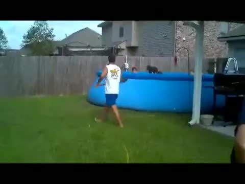 Watch Man vs pool GIF on Gfycat. Discover more IdiotsFightingThings, idiotsfightingthings GIFs on Gfycat