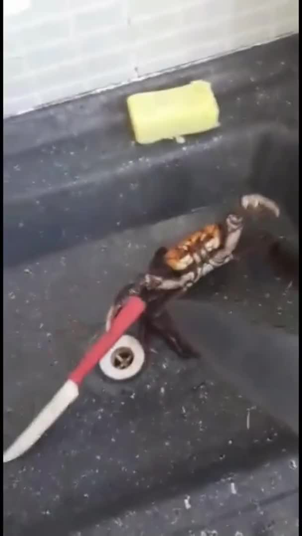 Watch and share Crab GIFs on Gfycat