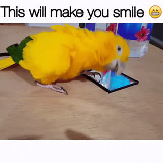 Dancing parrot xpost r/gifs • r/PartyParrot GIFs
