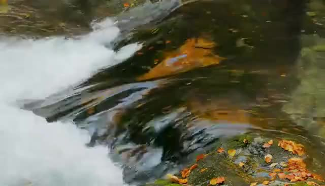 Watch and share Relaxing Autumn Forest - 4K Beautiful Nature Video & River Sounds - NO MUSIC - 1 Hour Ultra HD 2160p GIFs on Gfycat