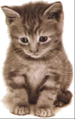 Watch and share Petit Chaton Mignon GIFs on Gfycat