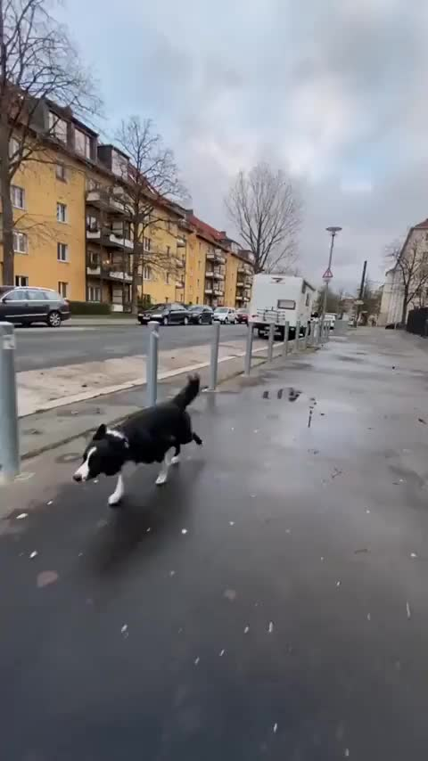 Watch and share Ability GIFs and Animal GIFs by Mhenvy on Gfycat