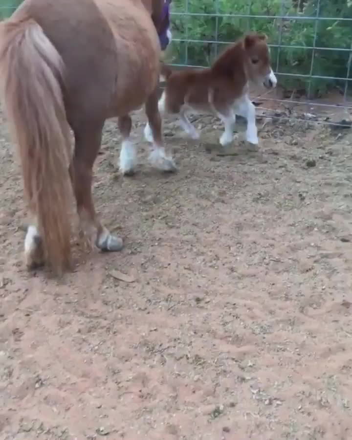 StoppedWorking, Zoomies, aww, Mini horse can't horse around (reddit) GIFs