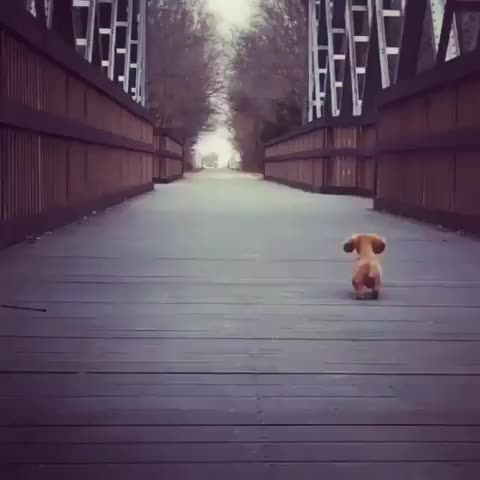 Watch Guard dog GIF by Boojibs (@boojibs) on Gfycat. Discover more Puppy, cute GIFs on Gfycat