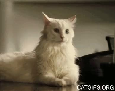 Watch Коти GIF on Gfycat. Discover more related GIFs on Gfycat