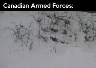 Watch and share Funny Canada Different Armed Forces GIFs on Gfycat