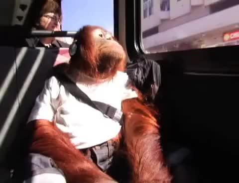 Watch monkey GIF on Gfycat. Discover more monkey GIFs on Gfycat