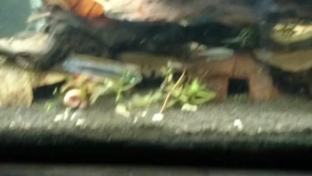 Watch Flare GIF by @mellor_21 on Gfycat. Discover more aquariums GIFs on Gfycat