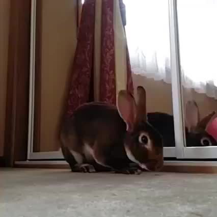 Eyebleach, gifsthatkeepongiving, Slo-mo yawn (reddit) GIFs