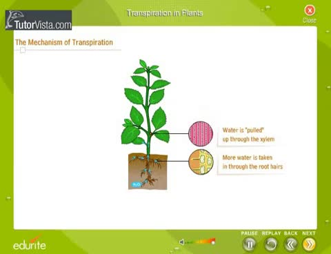 Watch and share Transpiration In Plants GIFs on Gfycat