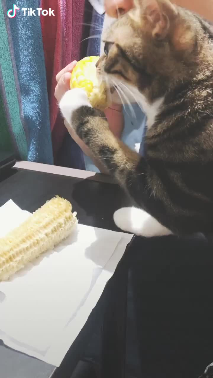 Eating together GIFs