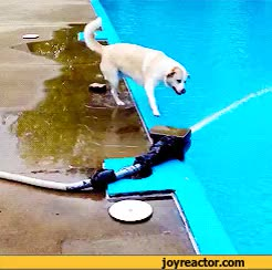 Watch and share Chien Piscine Eau Fail GIFs on Gfycat