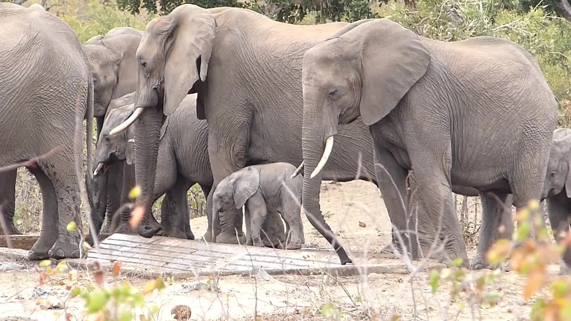 Pets & Animals, roaneric, Tiny baby Elephant GIFs