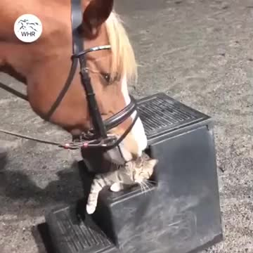 Watch and share Straigh Outta Salt Lick City GIFs by drjsfro on Gfycat
