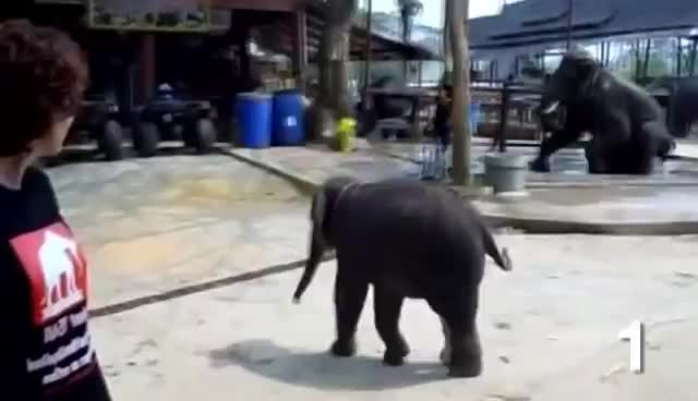 TOP 10 CUTEST BABY ELEPHANTS OF ALL TIME GIFs