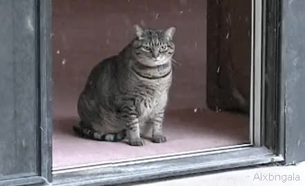 Watch and share Snow Da Snow Da Cat,snow,sad Fuck That Cat Fuck That Cat (reddit) GIFs by kr1st0s on Gfycat