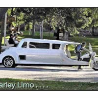 Watch and share Harley Limo GIFs on Gfycat