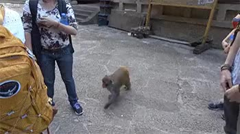 Watch I'll take that, thank you GIF on Gfycat. Discover more animalsbeingjerks GIFs on Gfycat
