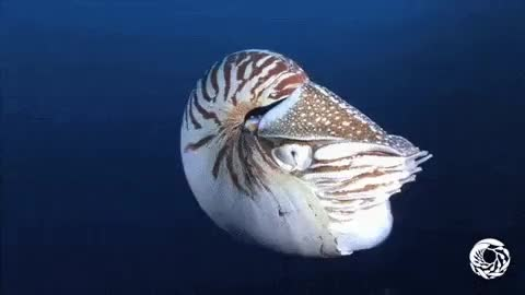 Watch and share Cephalopods GIFs and Cuttlefish GIFs on Gfycat