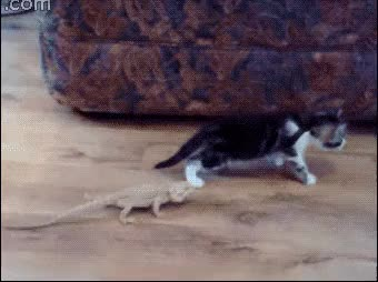 Watch and share Only Way To Combat A Lizard Is The Death Roll Berserk Attack (reddit) GIFs on Gfycat