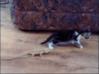 startledcats, stoppedworking, Only way to combat a lizard is the death roll berserk attack (reddit) GIFs