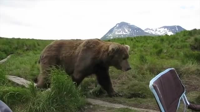 Watch and share Nature GIFs and Bear GIFs on Gfycat