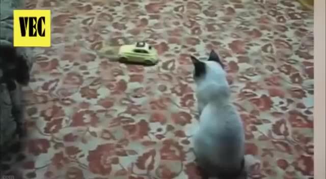cat (animal), gatos, startledcats, Os melhores sustos de gatos GIFs