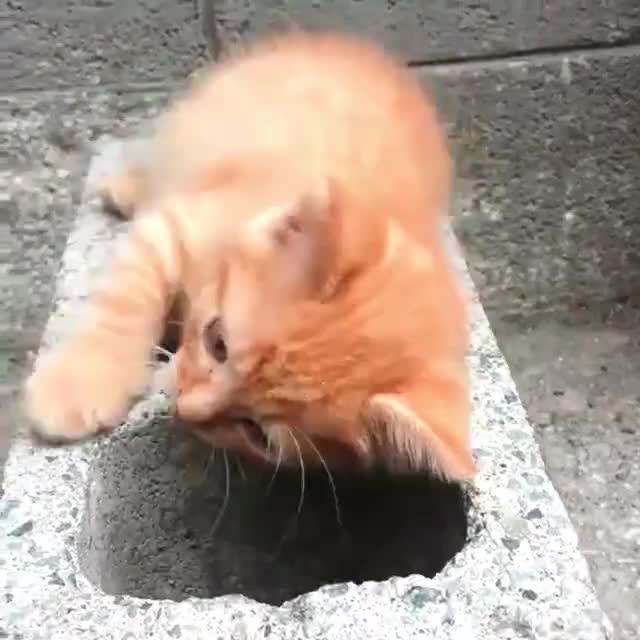 kittengifs, thisismylifenow, [hd] UNILAD GIFs