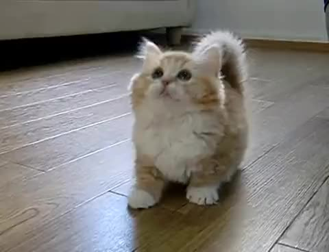 Watch Confused kitty GIF on Gfycat. Discover more confused, kitty, playing, toy GIFs on Gfycat