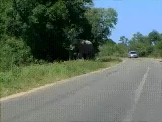 Watch and share Funny Elephant Charging Running Car Animated Pics GIFs on Gfycat