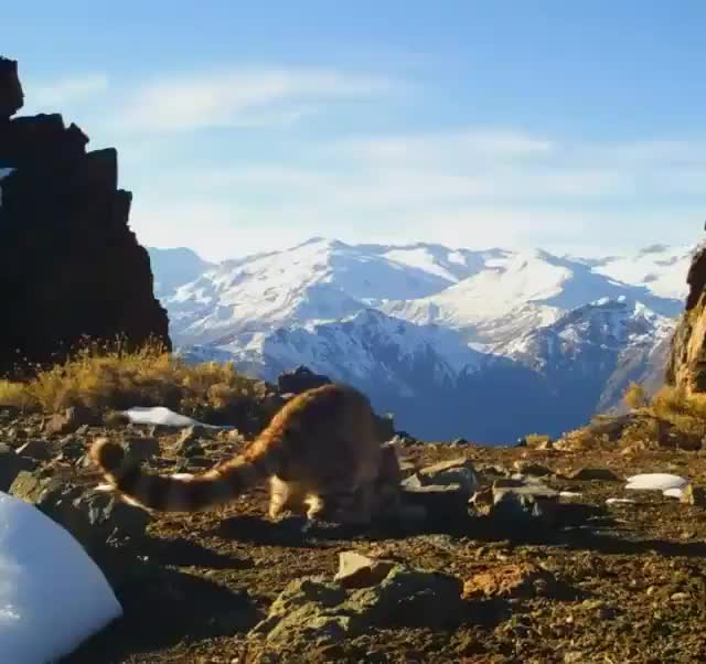 Watch and share Mountain GIFs and Animals GIFs by Mhenvy on Gfycat
