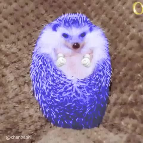 Watch sonic GIF by @napillow on Gfycat. Discover more related GIFs on Gfycat