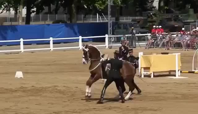 Watch horse GIF on Gfycat. Discover more beatiful GIFs on Gfycat