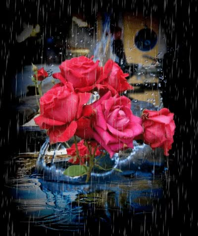 Watch this rose GIF on Gfycat. Discover more rose, roses GIFs on Gfycat