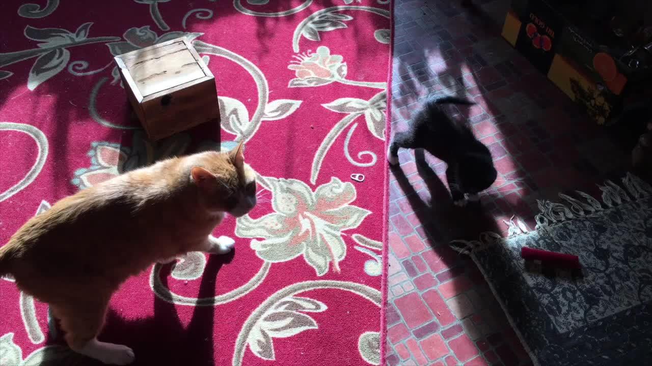 CatSlaps, david and goliath GIFs