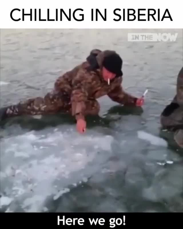 Watch and share Chilling In Siberia GIFs on Gfycat
