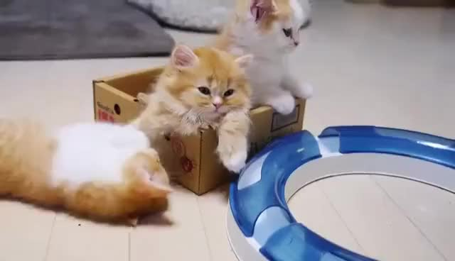 Watch and share A Cat Mom Hugs Her Cute Kittens Munchkin GIFs on Gfycat