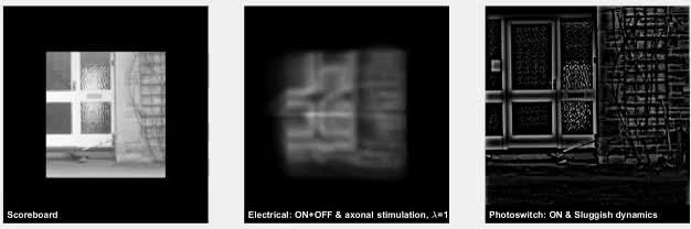 Watch Simulated image stream from ARGUS II Bionic eye GIF on Gfycat. Discover more argusII, futurology, simulation GIFs on Gfycat