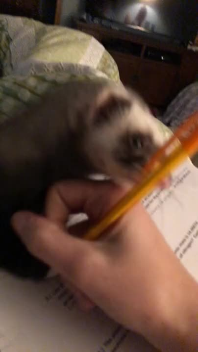 Watch and share My Study Partner Isn't Very Productive GIFs on Gfycat