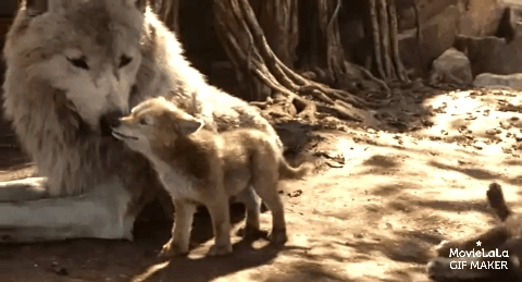 animalgifs, awwgifs, movies, The Jungle Book GIFs