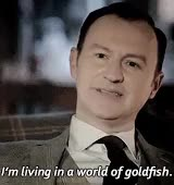 Watch and share Sherlock Holmes GIFs and Mycroft Holmes GIFs on Gfycat