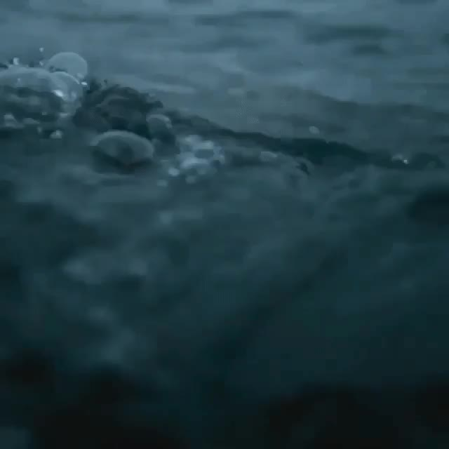 Watch and share Great White Shark GIFs by crawley on Gfycat