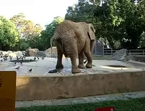 Watch elephant GIF on Gfycat. Discover more elephant GIFs on Gfycat