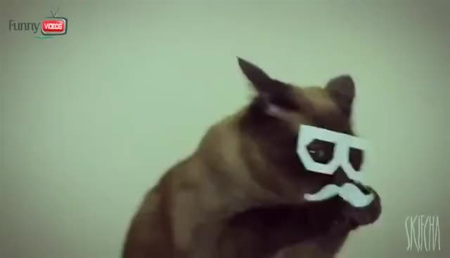 Watch Dubstep Cat [Dubstep Cat] GIF on Gfycat. Discover more related GIFs on Gfycat